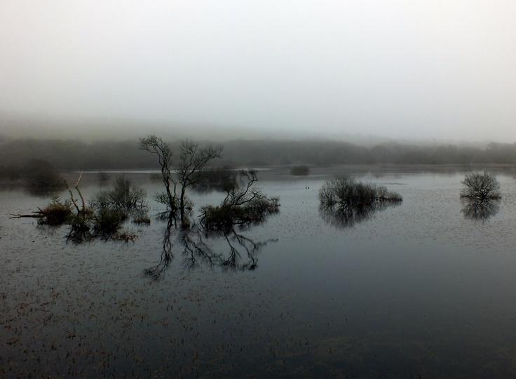 Stithians in fog