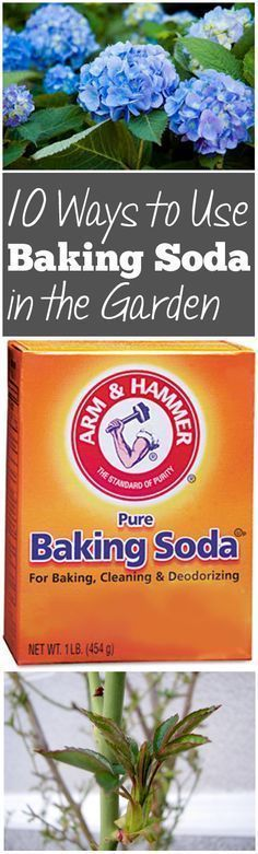 Stops cabbage worms...How to Use Baking Soda in the Garden