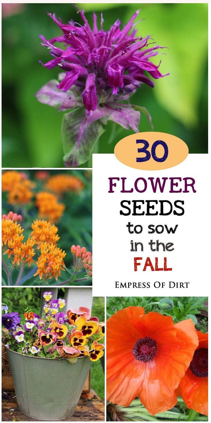 Want to get a jump start on your spring garden? There are many different flowering plants you can start from seed in the fall. These plants enjoy a cold, chilling season which actually encourages germination in the spring. Come see the suggestions and get seeds for your growing space. #sponsored