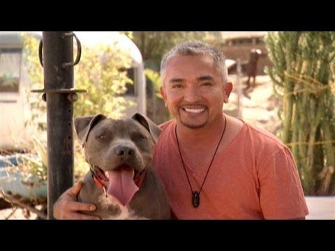 ▶ Most Aggressive Breeds - YouTube,  The fault is not  the dog or the breed, it is the human who raised them.