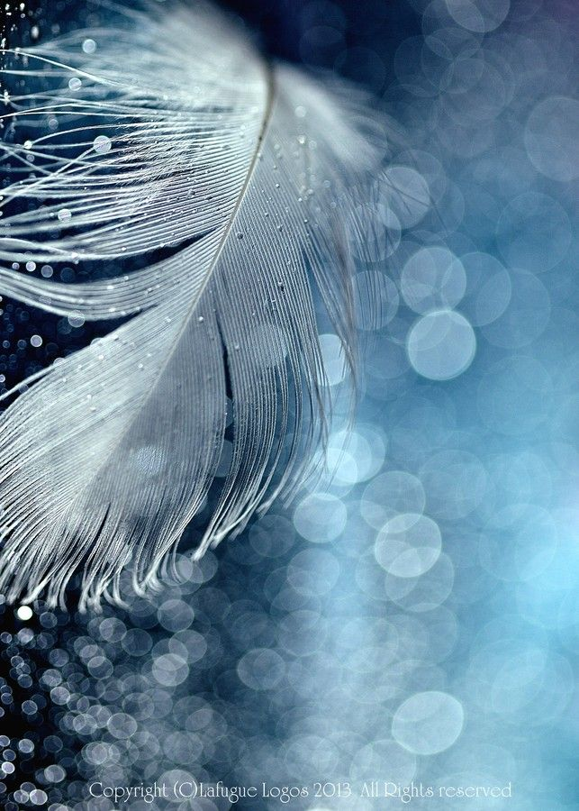 Fragments of Dreams by Lafugue Logos   on 500px