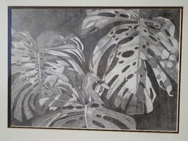Sketch of leaves in Win's garden - Linda