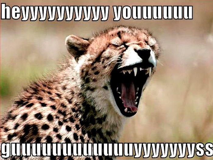 cutest baby cheetah jokes | Funny Cheetah | Cheetah's ...