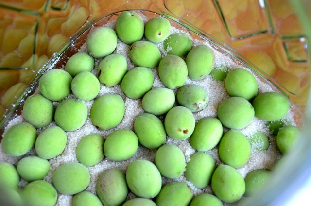 Japanese green plums for maesil chung syrup