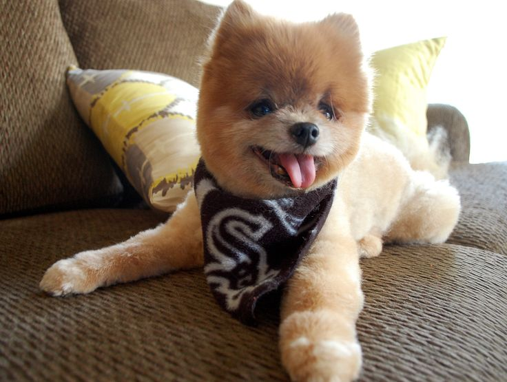 Wonderful Cutest Brown Adorable Dog - 2c05feeef11bd728a48ab2153eb54de9--cutest-dogs-adorable-puppies  Collection_19121  .jpg