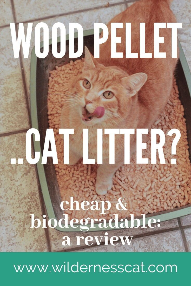 Wood Pellet Cat Litter Review We Tried Horse Bedding Cat