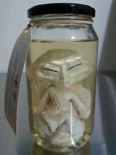 Alien Fetus / Embryo in Jar. Roswell / Area 51 UFO / X Files /Extraterrestrial