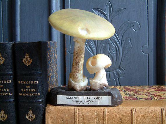 Espèces de champignons Français vintage modèle scientifique. Pharmacie Français champignon identification du modèle. Modèle de Sciences naturelles. Cabinet de curiosités.