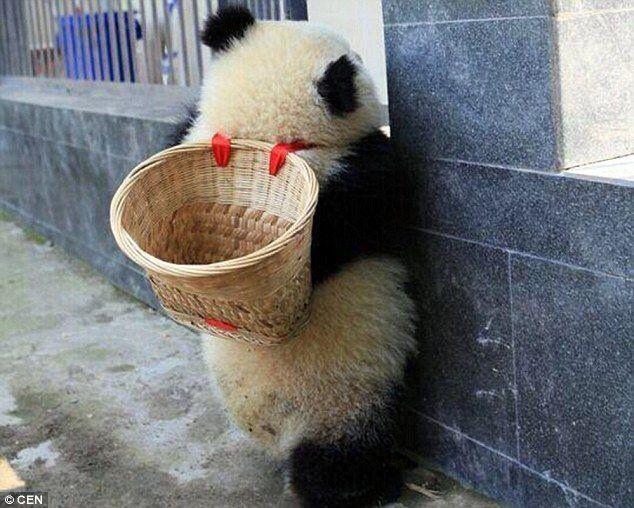 Kung Fu Panda is real! ❤️ 3/4