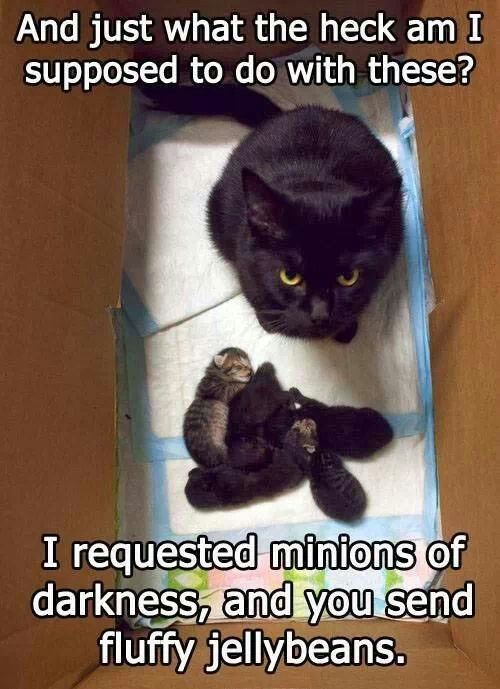 Here's a tip cat, those little Jellybeans of fur grow up to be exact replicas of you. The little terrors