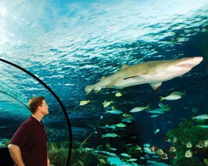 Ripley's Aquarium @ Gatlinburg, TN and @ Myrtle Beach, SC