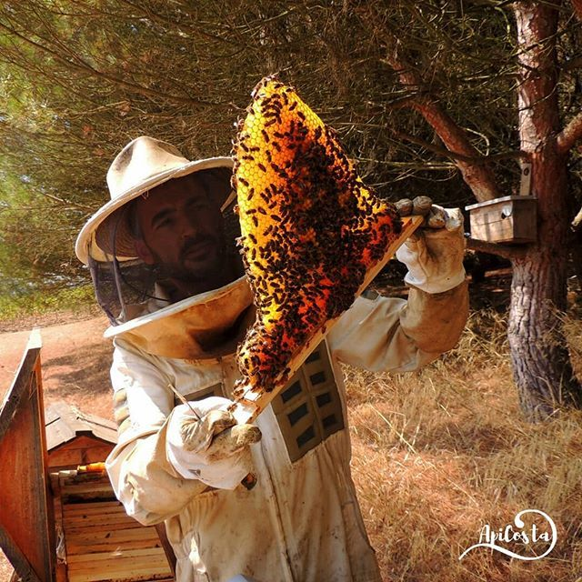 O MELHOR PRESENTE DE NATAL 🎄Ofereça o Curso Online de Apicultura. Pode aprender a ter abelhas já na proxima primavera. 🐝Tudo isto online para o seu conforto e no seu tempo.🐝Aproveite e seja original neste Natal 🎄siga o link http://acloja.apicosta.com/product-category/aprenda-apicultura-equilibrada/ #apiculturanatural #abelhas #Beekeeping #cursoonline #presentes  #Regram via @apicosta