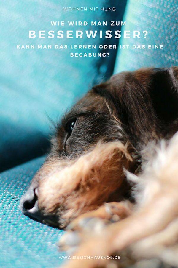 Wie Und Wieso Wird Man Zum Besserwisser Kann Man Das Lernen Oder Ist Das Eine Begabung Mit Bildern Hunde Hundebesitzer Besserwisser