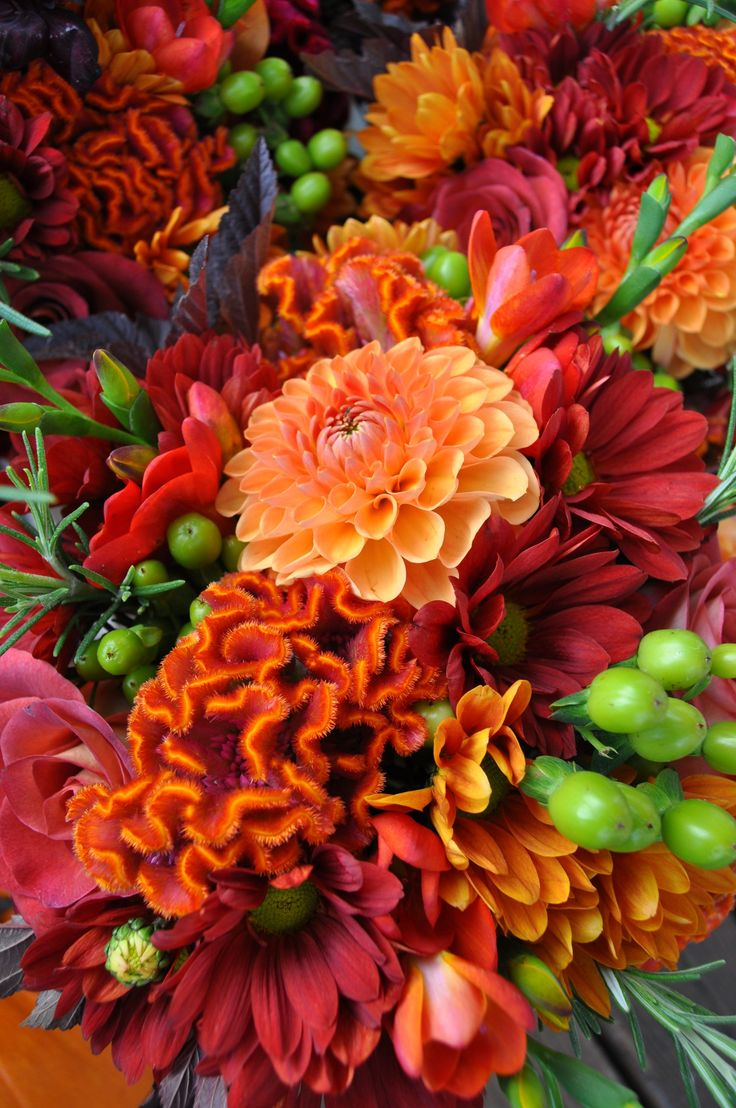 Celosia, chrysanthemums, rosemary, hypericum, dahlias, Rose 'Leonidas', freesia and fall leaves. Autumn Flowers