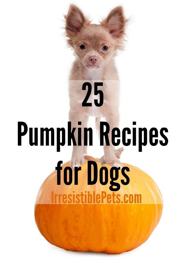 25 Pumpkin Recipes for Dogs by IrresistiblePets.com