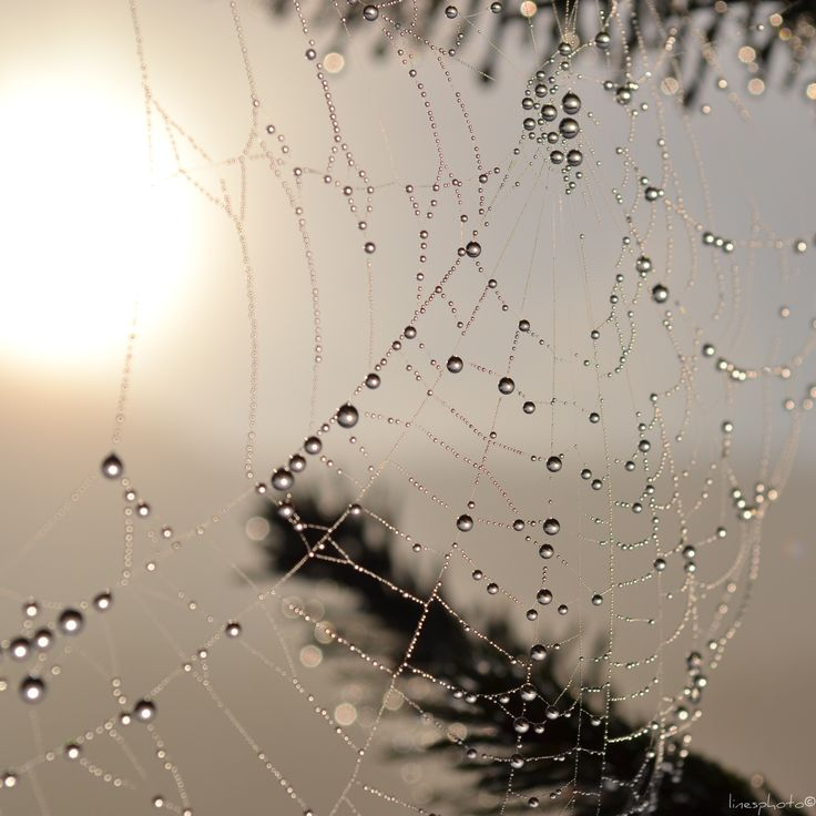 Spiderweb, lovely autum, dropsperfections