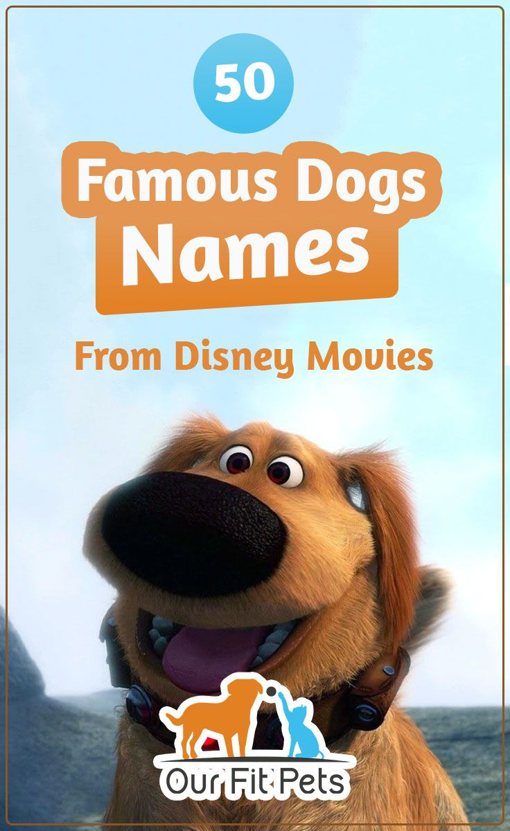 50 Famous Dogs Names From Disney Movies Our Fit Pets Dog Names Dog Names Disney Disney Pet Names