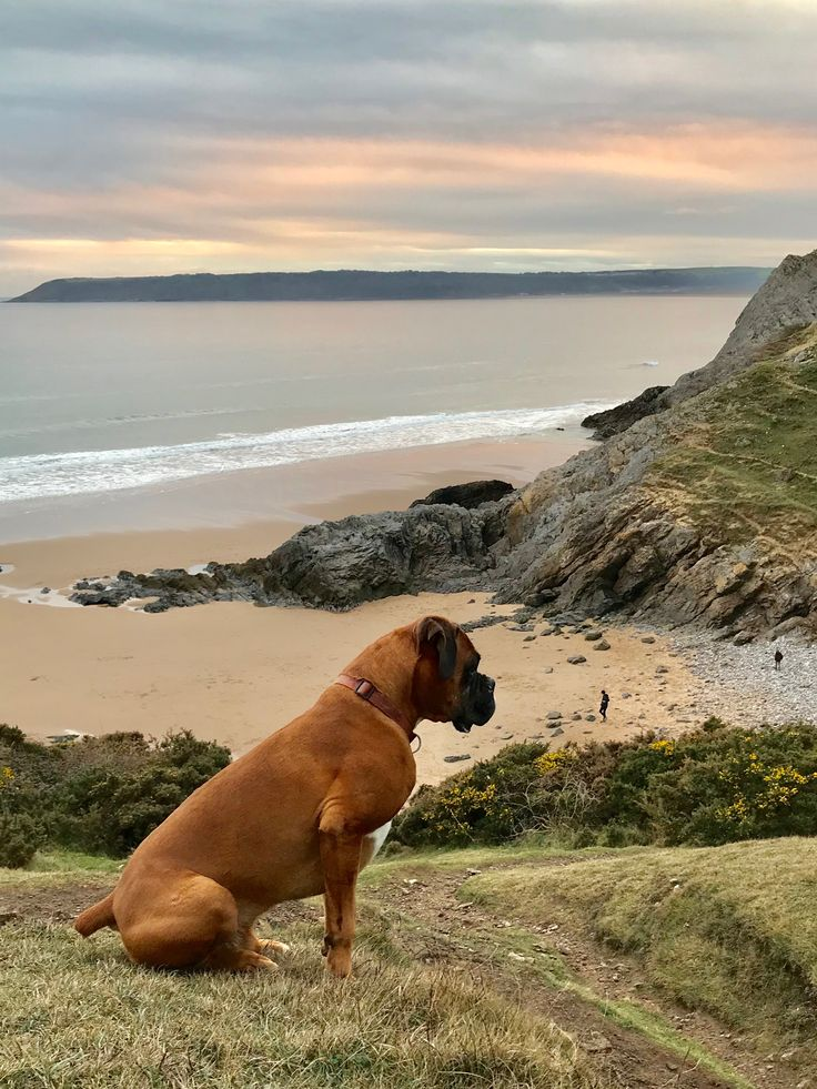 Henry looking back for Ike - what you don't see is Ike has gone the wrong way off the beach and is on the opposite cliff! He found us eventually!