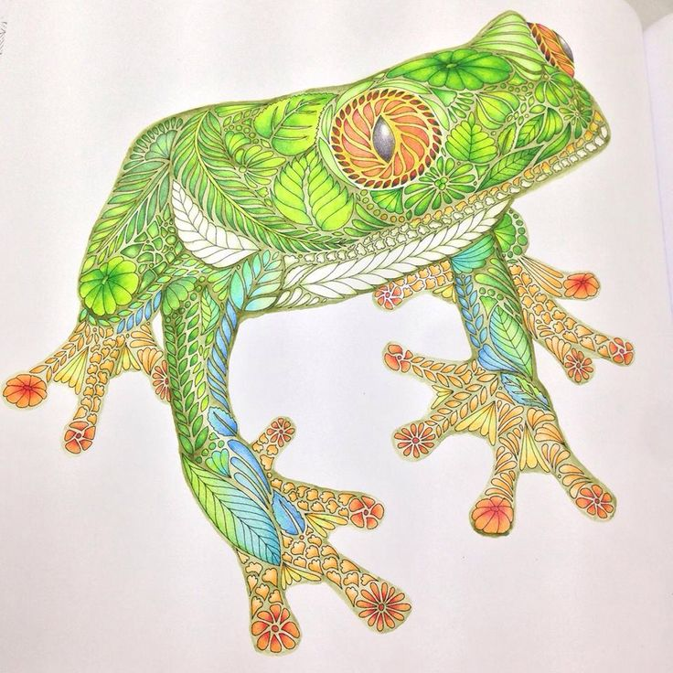 Frog Millie Marottas Tropical Wonderland Done With Muji Colorpencils And Faber