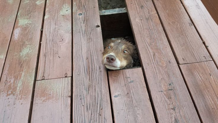 "27 Dogs Who Really, Really Don't Like Thunder 16. ""Kate tried to hide from the thunder."""