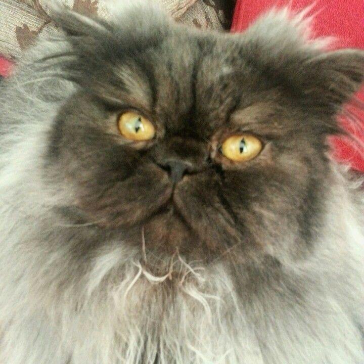my cat Ares