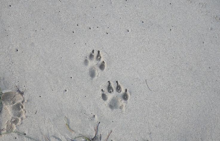 Local residents at Condado beach