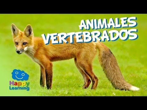 Animales Vertebrados | Videos Educativos para Niños - YouTube