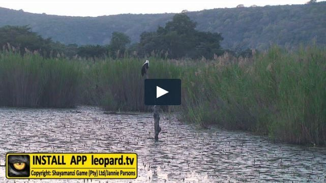 Here is a video filled with recent sightings of waterbirds at the various sites…