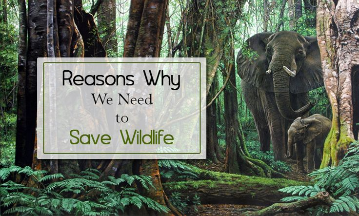 "need for wildlife conservation Preserving nature also builds resilience — shielding us from violent weather and giving wildlife a  ""we need to reach out to  conservation supports."