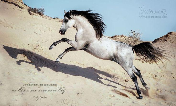 Djerba - Horse Photography, Dog Photography, Photography Bettina Niedermayr Horses - Man & Horse - Dog Portrait - stable signs - Calendar, Calendar horses, Haflinger calendar with carbon Fuchs Liz. Styria