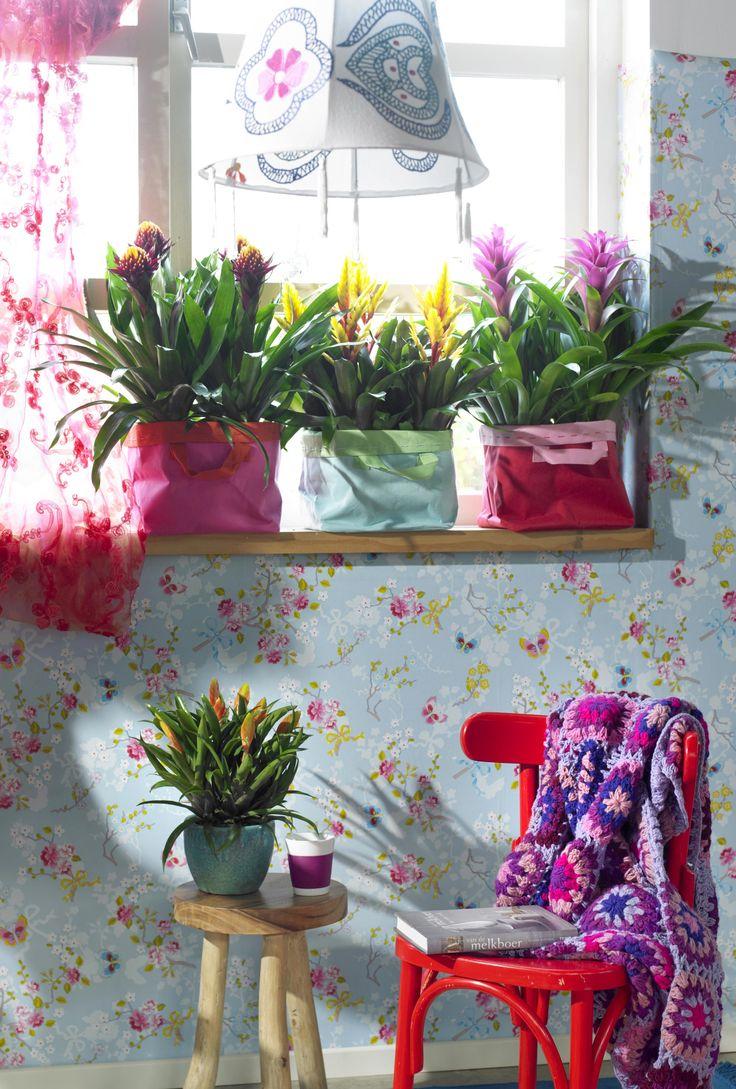 21 best planten styling images on pinterest | indoor gardening