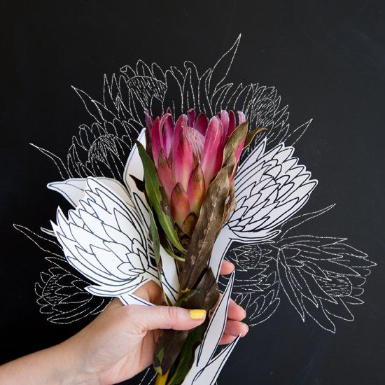 Learn how to draw the flower of the moment, the tropical protea on this 31 day flower drawing challenge
