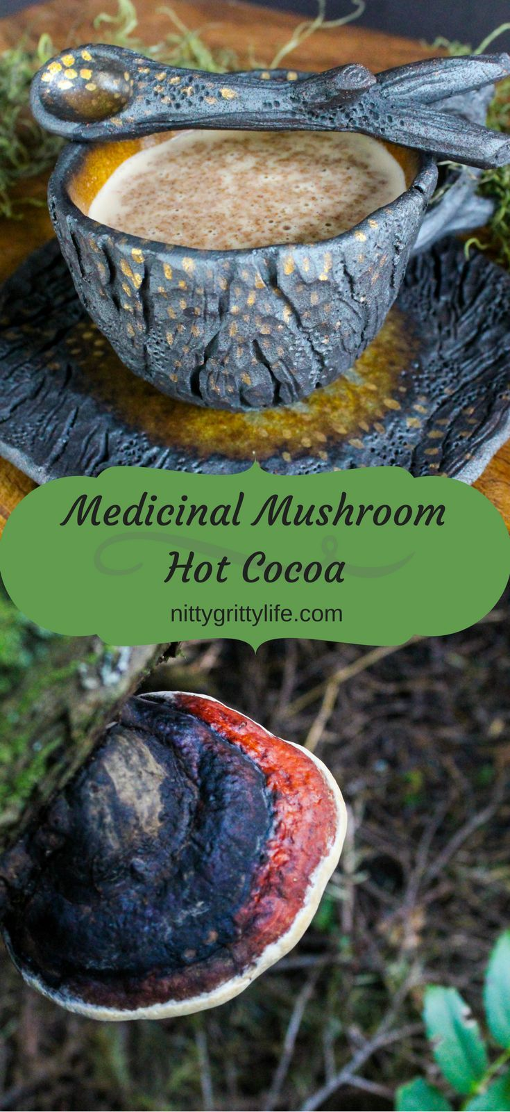 Medicinal Mushroom Hot Cocoa with Red Belted Polypore | Recipe