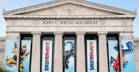 Shedd Aquarium Tickets= Experiences Not Things