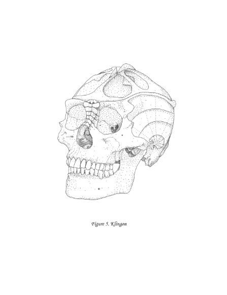 Star Trek Klingon skull scientific illustration from Virtual to Vintage.