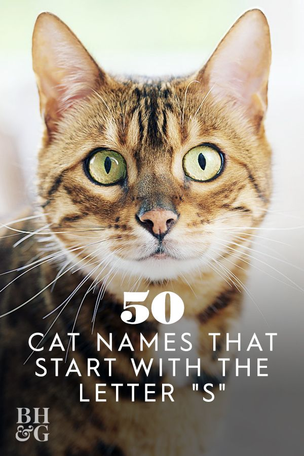 The 50 Greatest Cat Names Starting With S In 2020 Cat Names Kitten Names Great Cat