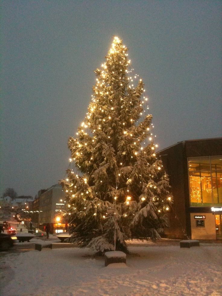 There is a beautiful Christmas tree in the square by Domkirken, decorating the city!   #stavanger #regionstavanger #visitnorway #norway