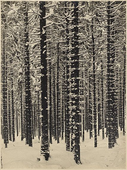 mountain forest in winter, 1926, albert renger-patzsch