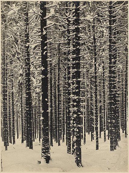 mountain forest in winter, 1926, albert renger-patzsch
