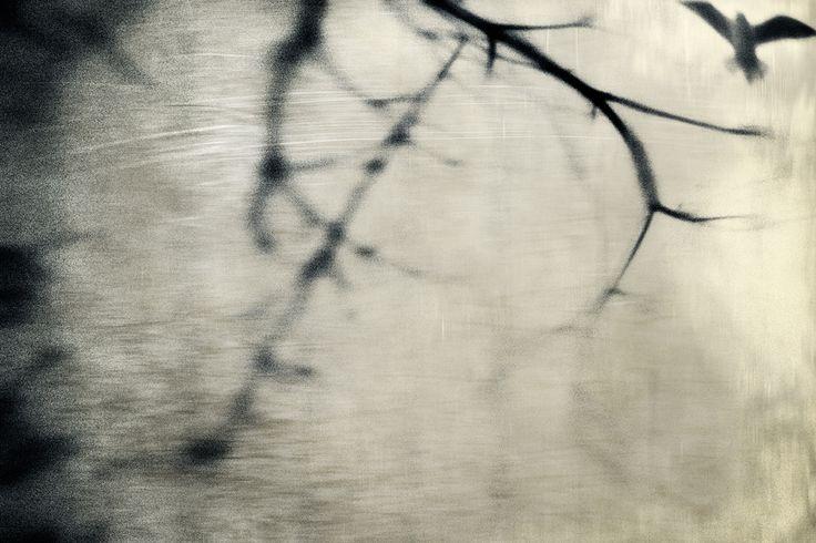 Call the wind by Ausadavut Sarum
