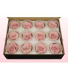Geconserveerde rozen Lichtroze-Wit M DOOS12