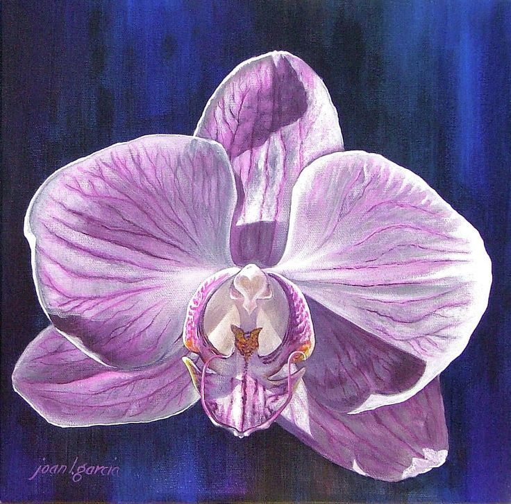 11 best Orchid Art images on Pinterest