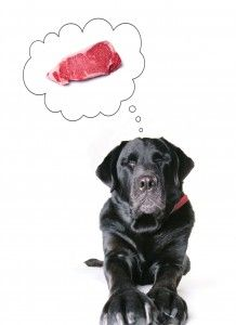 The Cost of Feeding Raw Food To Your Pet