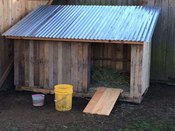 Front view of goose house. The ramp is temporary as I'm building a door that will double as the ramp during the day.