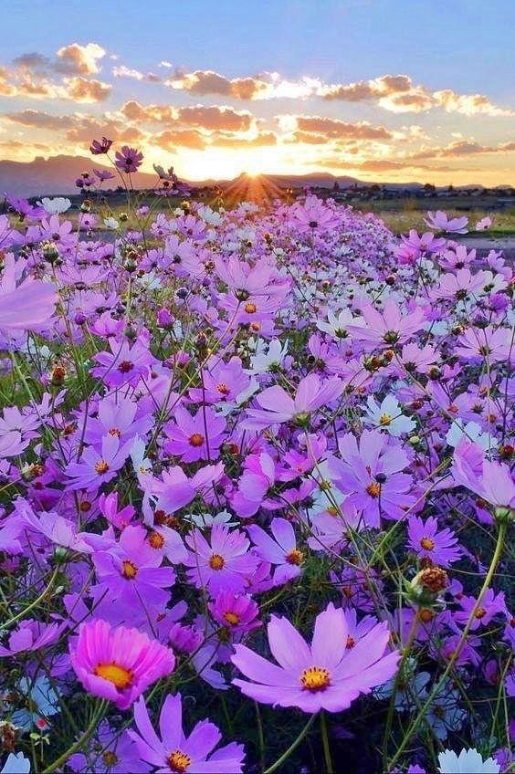 180 idee su FIORI DI CAMPO | fiori di campo, fiori, immagini di fiori