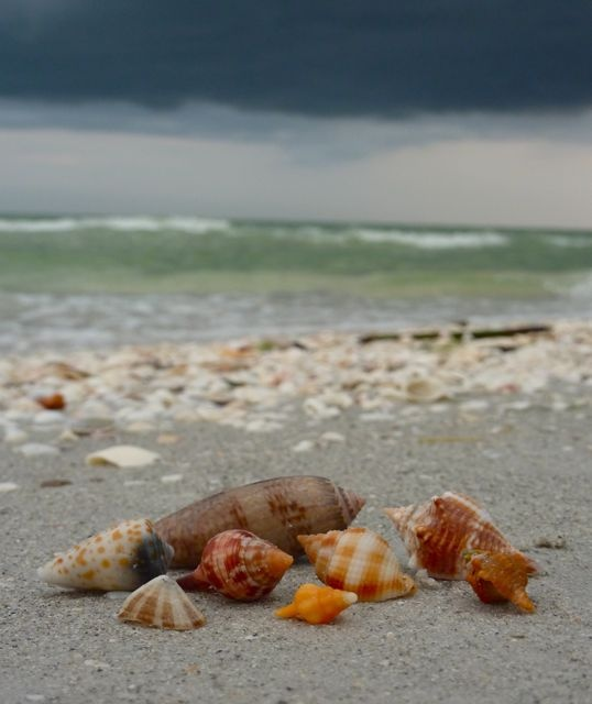 1000+ Images About I Love Shelling.com On Pinterest