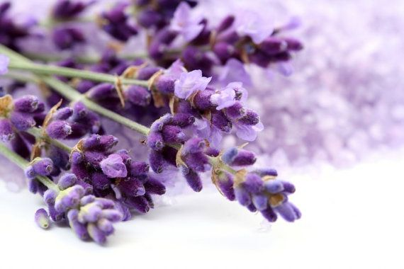 Organic Lavender seeds by Magicgreekgarden on Etsy, €1.30