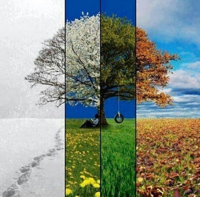89 best Four Seasons in 1 Picture images on Pinterest ...