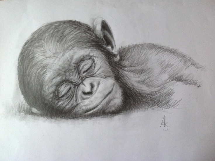 39 best Monkey art images on Pinterest | Monkey art ...