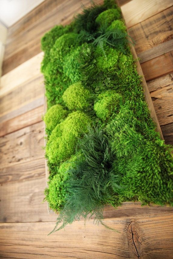 "40"" x 18"" Artisan Moss Plant Painting- No Care Green Moss Wall Art. Real Preserved Moss & Ferns in Reclaimed Wood Frame. Moss and Fern Art."